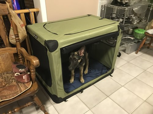 german shepherd puppy in a crate