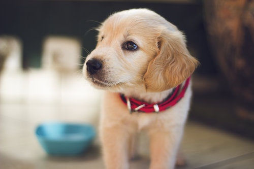 puppy looking away