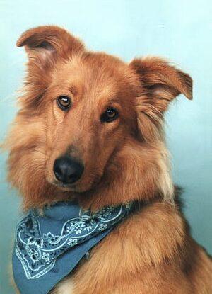 dog wearing a bandana
