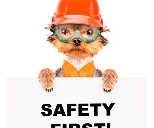 puppy with a safety first sign