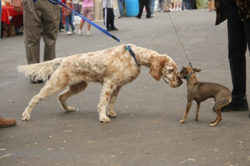 Dog sniffing a dog on the street