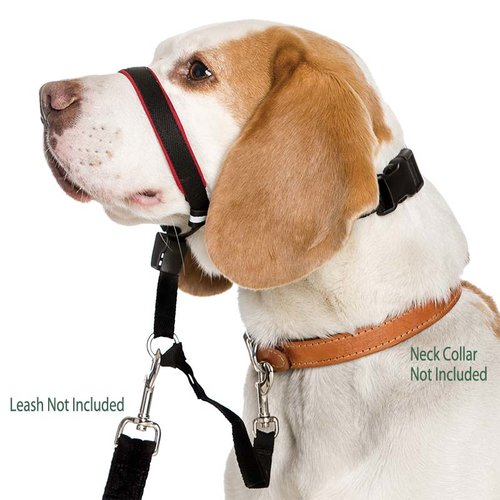 dog wearing head halter