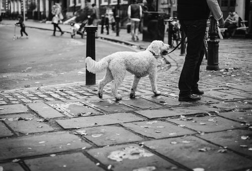 dog tied outside in the street